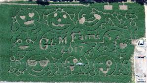 Livermore Pumpkin Patch by The Craziest Corn Mazes In The Bay Funcheapsf Com