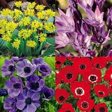 discounted flower bulbs and perennial plants on sale now