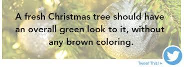 Fresh Cut Christmas Trees At Menards by Keep Christmas Trees Fresh At Menards