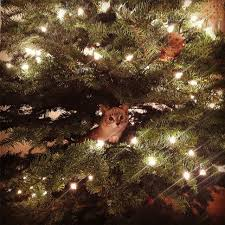 Make Dalek Christmas Tree by Treegonometry U0027 Uses Math For Perfect Xmas Tree Cnet