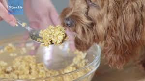 Pumpkin Puree For Dog Constipation by How To Make Diy Dog Treats Rodale U0027s Organic Life
