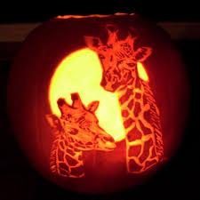 Pumpkin Giraffe Pumpkin Craving Pinterest Pumpkin Carving