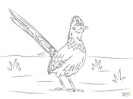 Click The Greater Roadrunner Bird Coloring Pages To View Printable