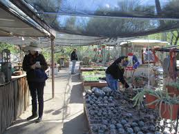 The Moorten Botanical Garden 1