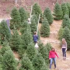 Christmas Tree Farm For Sale Boone Nc by Papa Goats Tree Farm Home Facebook