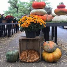 Pumpkin Patch Hayrides Lancaster Pa by Cherry Hill Orchards Lancaster Pennsylvania Facebook