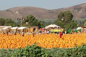 Halloween Mazes In Los Angeles the best pumpkin patches in los angeles