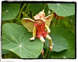 Random Camera Blog Fairyland At Matthaei Botanical Gardens