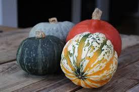 Varieties Of Pumpkins Uk by Butternut Squash U2013 Veg Nerds