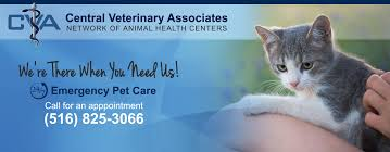Queens Veterinary Services | Animal Hospital Nassau County Promo Code For Hotwire January 2019 Coupons Factory Cnection Kv Vet Supply Promo Are Cloth Nappies Worth It How To Get My Pillow Rissy Roos Coupon Valleyvetcom Busch Gardens Lucy Free Shipping Codes Farm Fresh Matchups Vtsupply 6 Dollar Shirts Ed Voyles Acura Itunes Gift Card Singapore Cheers Valley Bbc Shop Dominos Pizza Delivery Uk Great Choice Discount Capchur Disposable Aero Syringes Wgrit Blasted Needles Poshmark Share Coupon Best Value Copy