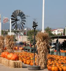 Pumpkin Patch San Fernando Valley Ca by Forneris Farms Localharvest