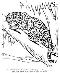 Indian Leopard Coloring Page