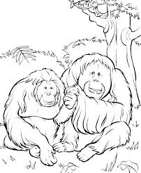 Two Orangutans In The Jungle Coloring Pages