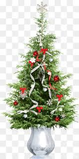 Spruce Pine Christmas Tree Cedar