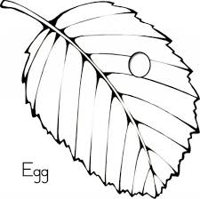 Egg Coloring Pages And On Pinterest With Regard To Butterfly Life Cycle Page