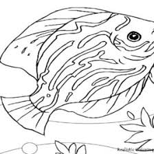 Best Photos Of Realistic Fish Coloring Pages Bass