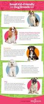 Do All Big Dogs Shed by Infographics The Best Small Dog Breeds For Kids Dogtopia