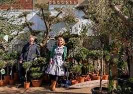A huge range of Olive Trees