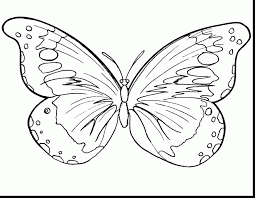 Great Butterfly Coloring Pages With Insect And To Print
