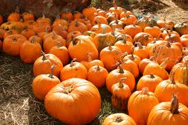 Pumpkin Patch Sf by 15 Pumpkin Patches To Get You In The Spirit Upout Blog