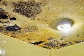 wasser beschädigt decke und pilz im badezimmer stockfoto und mehr bilder alt