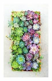 Pretty Beautiful Colorful Succulent Garden