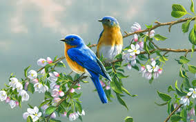 Beautiful Birds Painting Art Wallpaper