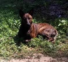 le berger pas cher selles sur cher 41 un 3e chien décède après s être baigné dans