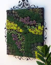 Living Pictures Cuttings Of Assorted Succulents Woven Together In Everything From Picture Frames To Pallet Boxes Are Hot Among Garden Designers And