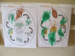 Life Cycle Of A Pumpkin Seed Worksheet by Pumpkin Patch Fun Play Learn Share