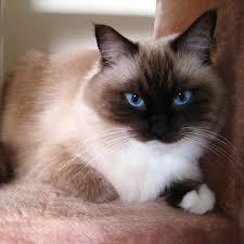 popular cat names most popular cat names 2016 popsugar pets
