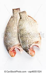 Nile Tilapia On The White Background Fish