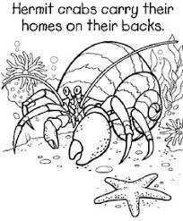 Hermit Crab Coloring Pages For Kids