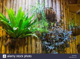 100 Www.home And Garden Flower Baskets With Tropical Plants On A Wooden Wall Home