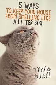 Cat Litter Carpet by Best 25 Litter Box Ideas On Pinterest Hidden Litter Boxes Cat