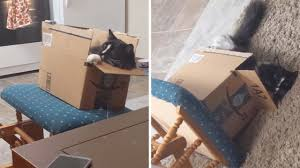 Clumsy Cat Falls Off Rocking Chair