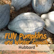 Types Of Pumpkins For Baking by 11 Fun Pumpkins And Winter Squash And How To Use Them Home Grown Fun