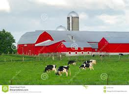 Red Farm Barn With Cows Stock Image. Image Of Dairy, Meadow - 27597443 Ukdairy Ukdairytravel Naturally Manage Barn Temperature With Curtain Farmtek Blog The Dairy Mom Why Do Cows Live In Barns Dairylivestock Big Ass Fans History Of The Barn Consider Deep Pack For Cow Comfort And Manure Management Part 1 Avoid Heat Stress Dairy Cow Barns Vetsmarttubes Tube Agpro Insurance Employer Compliance Services Virtual Farm Component Custom Horse In Sherwood Oregon Dc Building My