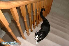 cat stairs cats and stairs band of cats