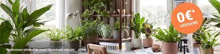 luftreinigende pflanzen bakker