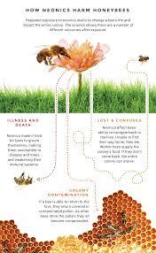 bee bee habitat