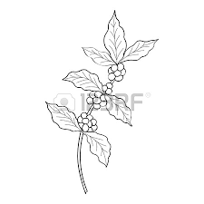 450x450 Coffee Branch Plant With Leaf Berry Vintage Hand Drawn