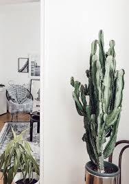 jungle großer kaktus im wohnzimmer kaktus