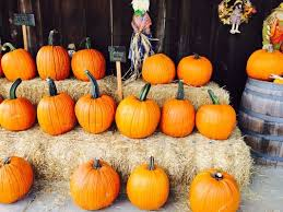 Livermore Pumpkin Patch by G U0026m Farms 487 E Airway Blvd Livermore Ca Restaurants Mapquest
