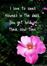 108 best flower & bloom quotes images on Pinterest