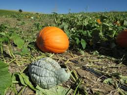Apple Orchard Pumpkin Patch Sioux Falls Sd by 10 Ideas For Fall Fun In Omaha The Walking Tourists