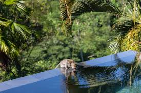 100 Hanging Garden Resort Bali S Of One Of The Most Beautiful Resorts In