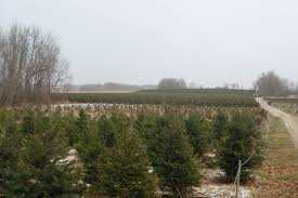 Where To Get The Perfect Christmas Tree In Ottawa SavvyMom