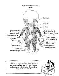 Doctor Marios Anatomy Coloring Book Page
