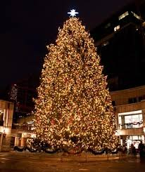 What Is The Best Christmas Tree Variety by America U0027s Tallest Christmas Trees Travel Leisure